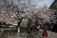 Երևանը՝ ծաղկունքում