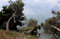 «Կանաչ ապագա» շարժումը Սևանի ափին  նախաձեռնել էր հանրային էքսպեդիցիա