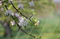 Kanachut. Spring in Armenia