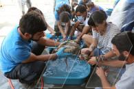 NABU-ի կամավորները արագիլներին փորձում են վերադարձնել ճերմակը
