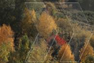 Դեղինը. աշնան գույները Հայաստանում